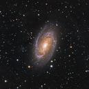 M81 iTelescope T3,                                Richard Muhlack