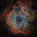 Rosette Nebula - SHO,                                jlangston_astro