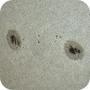 Sunspots AR2835 & AR2836 in original color white light,                                Wilco Kasteleijn