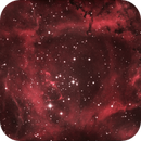 NGC 2237,                                Filippo D'Arminio