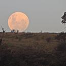 Moonrise in the Brazilian Cerrado,                                Odilon Simões Corrêa