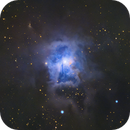 NGC 7023 • Iris Nebula from a White Zone,                                Douglas J Struble
