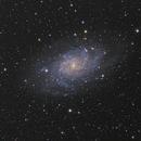 M33,                                jelisa
