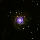 m 74  galassia  nei  pesci                                                             distanza 47 milioni  A.L.,                                Carlo Colombo