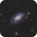 NGC2403 in Camelopardalis,                                Masahiro Takahashi