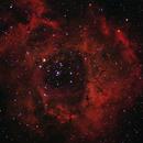 Rosette Nebula,                                MrPeppers