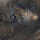 NGC 2264 SHO,                                Scott Richards