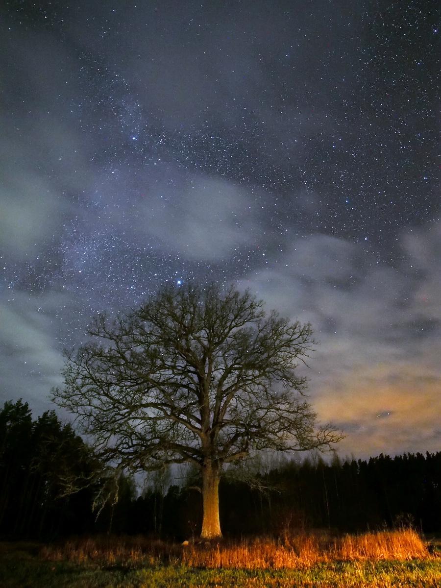 Stars and Clouds,                                Vital