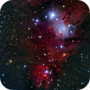 Cone and Fox Fur Nebulae with Christmas Tree cluster in Monoceros,                                S. Stirling