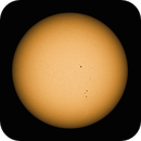 Sun (Feb 2016),                                Stuart Goodwin
