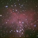 Eagle Nebula,                                Robin Clark - EAA imager