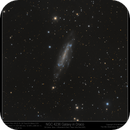 NGC 4236 Galaxy in Draco Bi-colour UV & NIR,                                Mike Oates