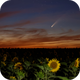 Comet C/2020 F3 Neowise with sunflowers,                                Didier Walliang