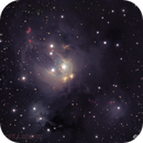 Rosebud Nebula,                                Ian Gorin