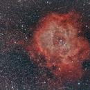 Rosette Nebula - NGC 2237,                                David Augros
