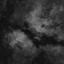 IC 1318  -  Schmetterlingsnebel - Butterfly Nebula,                                Michael Hoppe
