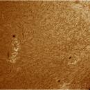 sol 25.8.2014,                                jose