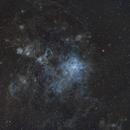 Tarantula Nebula in Narrowband,                                Daniel F