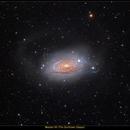The Sunflower Galaxy- M63,                                Bogdan Jarzyna