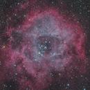 The Rosette Nebula,                                Toshiya Arai