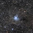 NGC7023 - La nebuleuse de l'Iris,                                ZlochTeamAstro