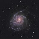 M101,                                Drew Sams