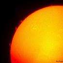 le Soleil du jour,                                Pouget