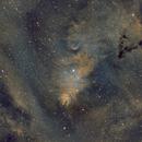 NGC 2264 Christmas Tree/Cone Nebula  SHO,                                Edward Overstreet