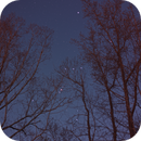 Orion through the trees of my new backyard :(,                                drivingcat