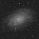 M 33 Luminance (Work In Progress),                                Paul Muskee