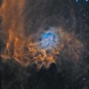 Flaming Star SH2-229,                                John Favalessa