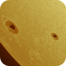 Shot NOAA AR 2785 & 2786 this morning in the Sodium D wavelength.,                                John O'Neal, NC Stargazer