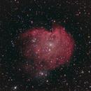 NGC  2174,                                angelo mazzotti