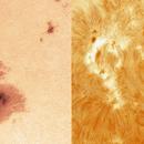 Sun spots group AR2786 in visible and H-alpha spectrum,                                Miroslav Kalinaj