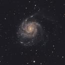 Messier 101,                                Gianluca Falcier