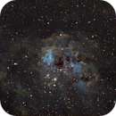 ic410 with The Tadpoles,                                Giovanni Fiume