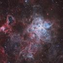 NGC 2070 Tarantula - Drizzle,                                Maicon Germiniani