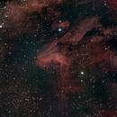 IC5070 Pelican Nebula,                                Bock Chuang Yee