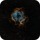 Rosette Nebula,                                Gregg Williams