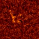 2020.08.10 Sun AR12770 H-Alpha,                                Vladimir