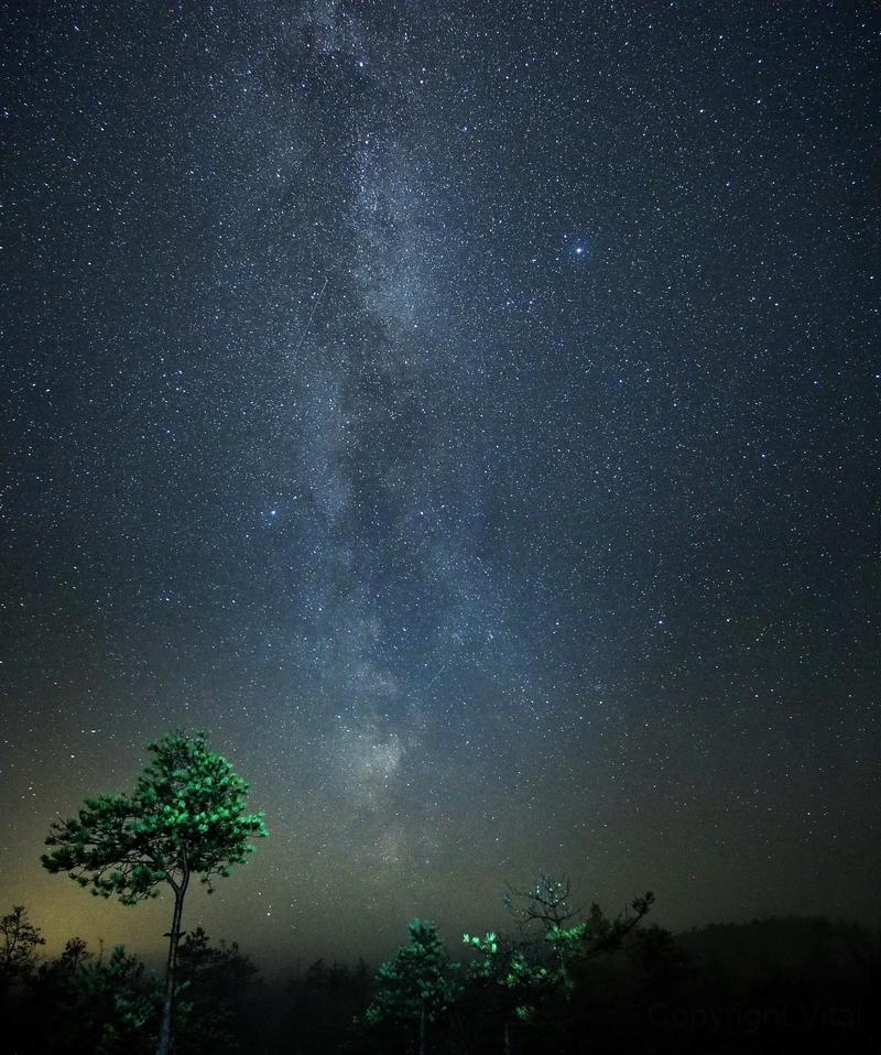 Stars and Tree,                                Vital