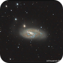 M66 _ Asi1600mm-C @Cannes,                                quercus