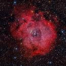 Nebulosa Roseta  NGC 2237,                                Ernesto Arredondo