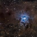 NGC7023 Iris,                                Nik Coli