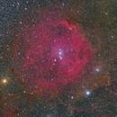 Sh2-264 Angelfish Nebula,                                Marukawa