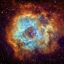 Rosette Nebula in SHO,                                dts350z