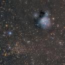 NGC7129,                                Andrei Ioda