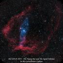 Sh2-129 & OU4 - The Flying Bat and the Squid Nebulae  HOO,                                Paul Borchardt