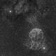 Jellyfish,                                Psion