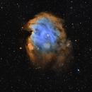NGC 2174-5 Monkey Head Nebula,                                Jerry@Caselle